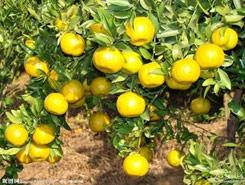 磁水在提高农作物产量改善农作物品质方面的作用