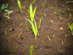 磁水在提高种子发芽率方面的作用